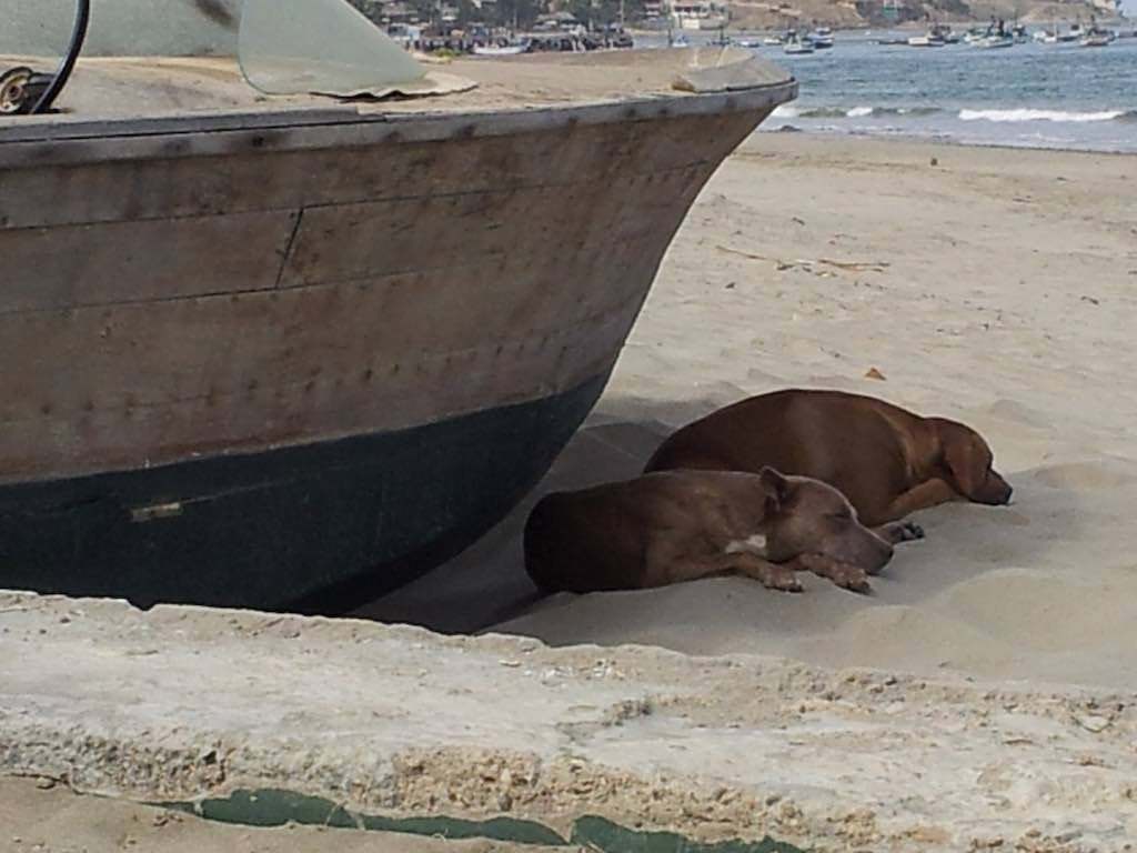 Mancora, Peru - Beach Dogs Lazing