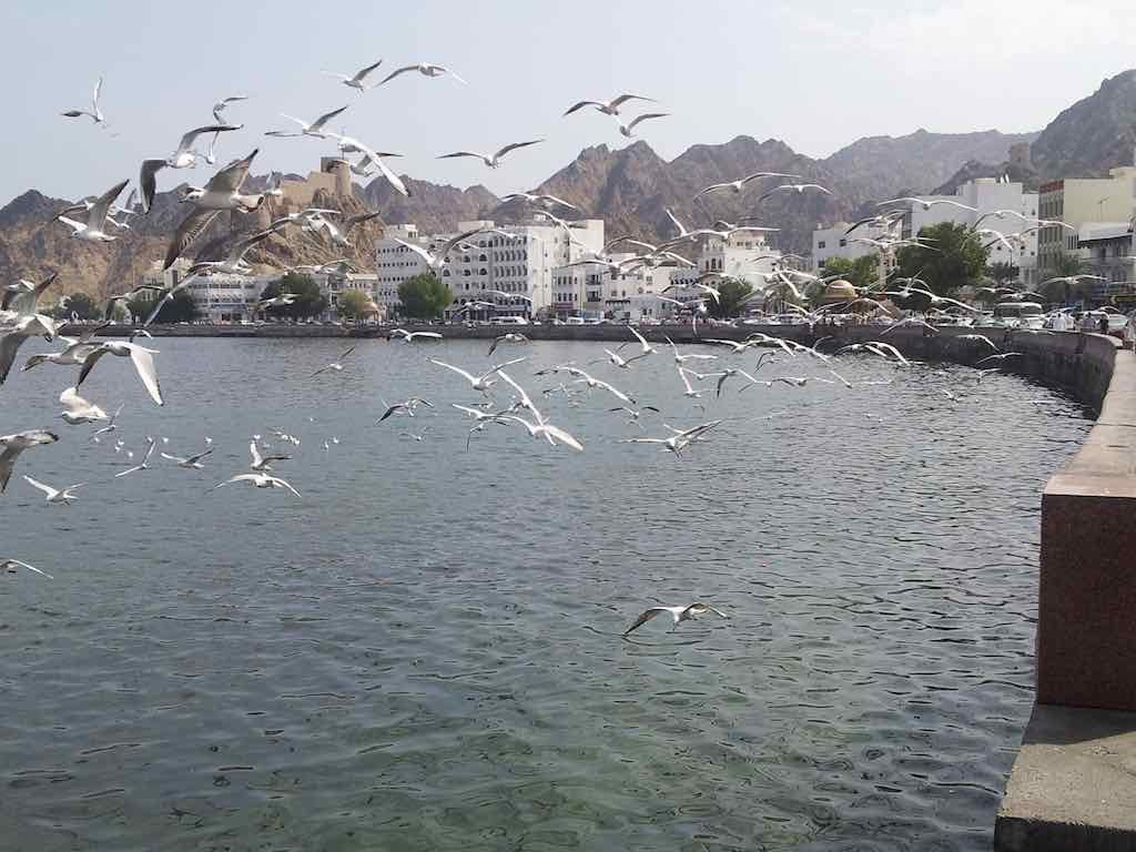 Muscat, Oman - Seagulls at Muttrah