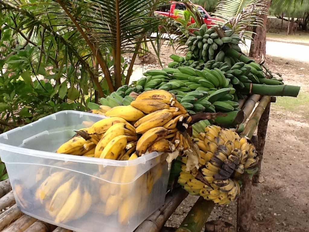 Guam - Bananas and Plantains