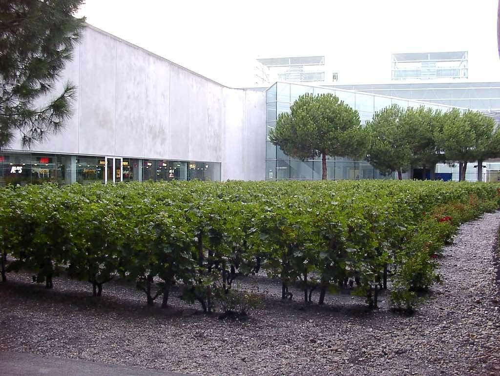 Bordeaux, France - Airport (BOD) Vineyard