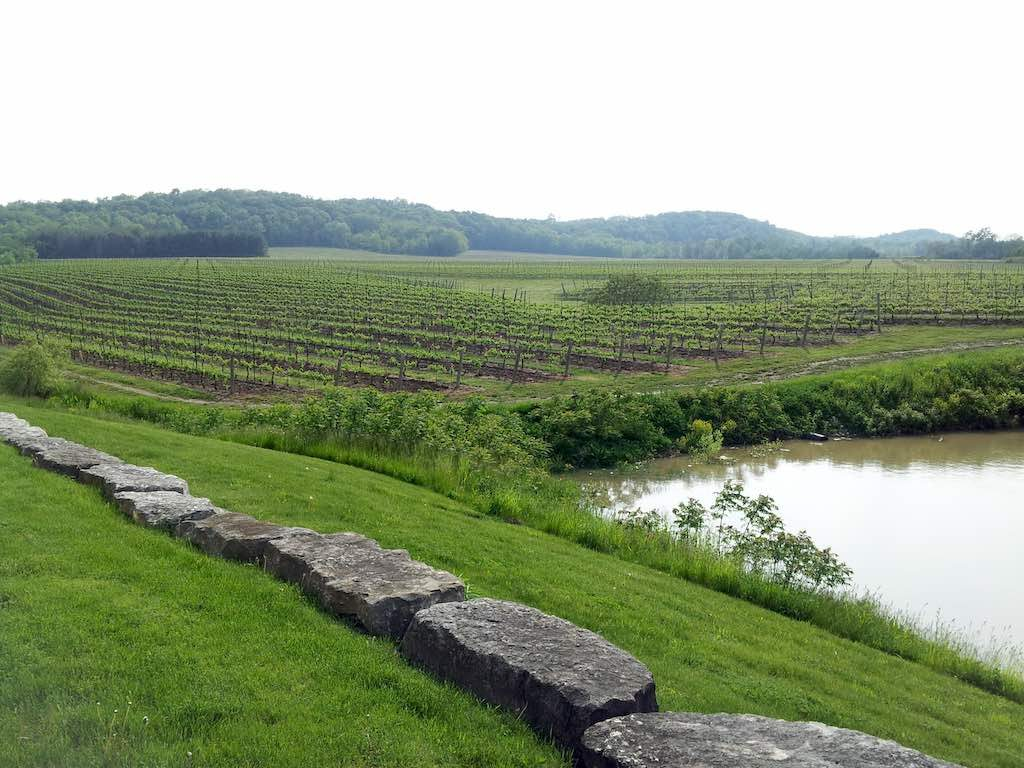 Peninsula Ridge Estates Winery, Ontario Canada - Vineyard
