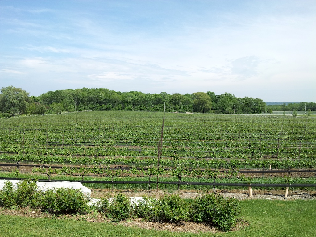 Rosewood Winery Estate, Ontario Canada - Vineyards