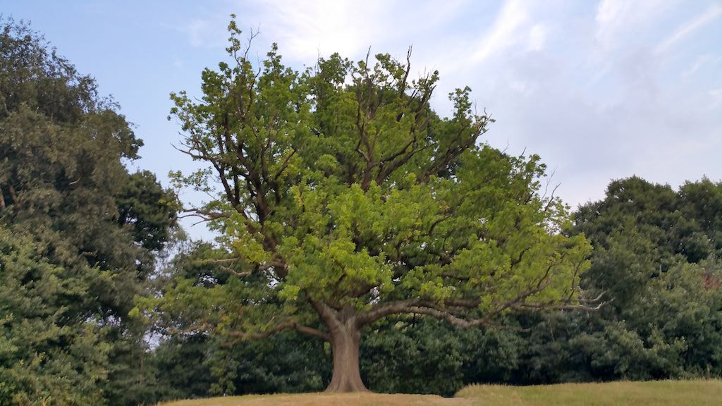 Hampstead Heath, United Kingdom - Large Tree in Park