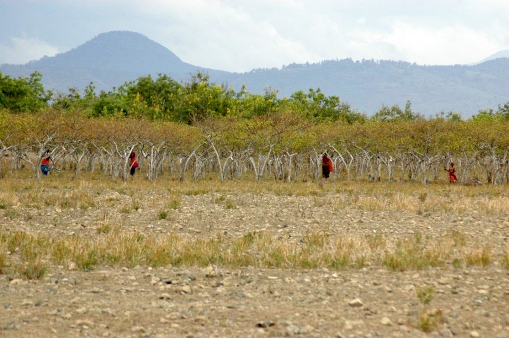 Arusha, Tanzania - Maasai women in Arusha