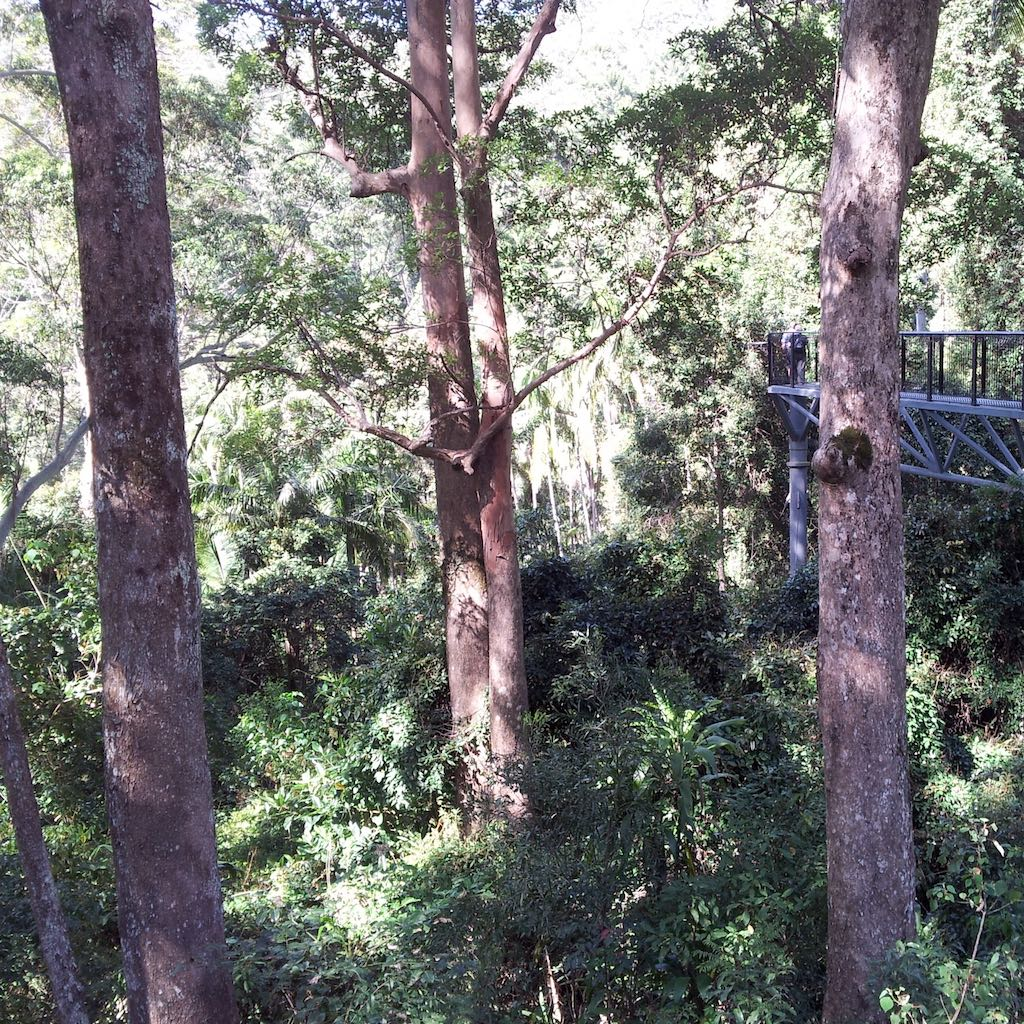 Tamborine Rainforest, Queensland, Australia - Tamborine Skywalk