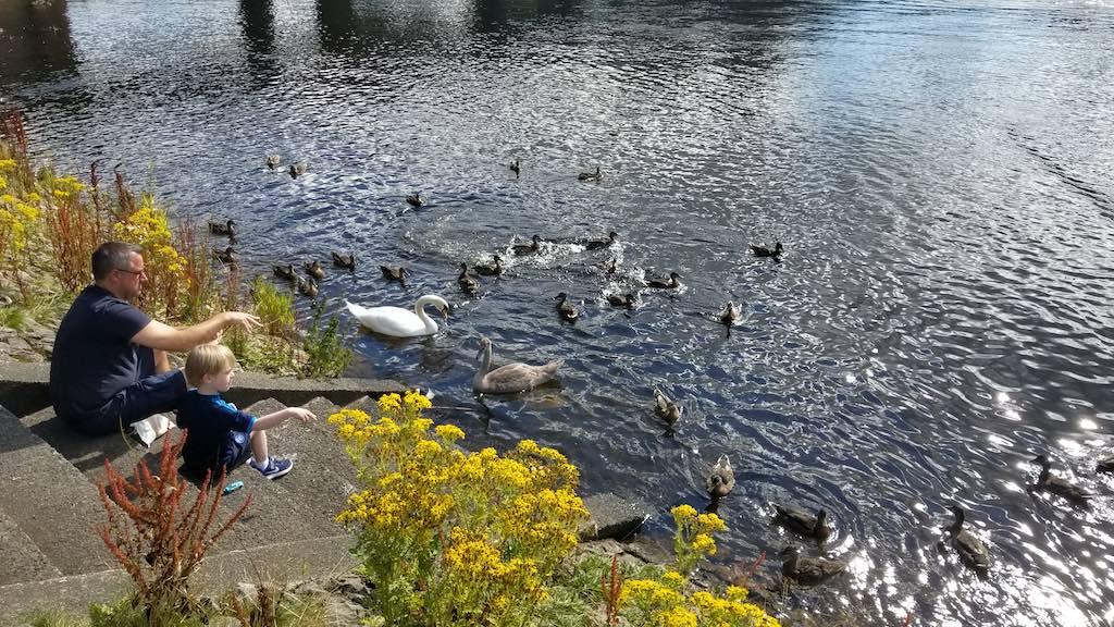 Balloch, Scotland United Kingdom-Loch dad and his son feeding ducks