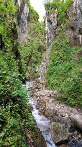 Canionul, Șapte Scări (7 Ladders Canyon), Brasov, Romania - One Ladder