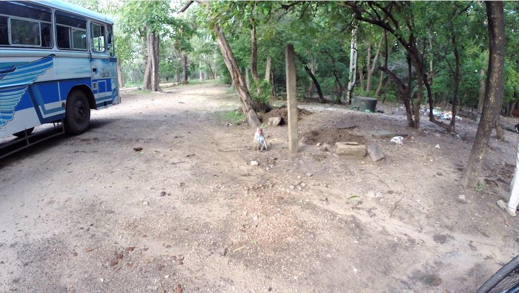 Polonnaruwa, Sri Lanka - Monkey