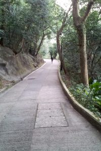 The Trail to the Peak, Hong Kong - Trail down hill