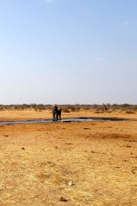 Etosha National Park, Namibia - Elephant and Giraffe at watering hole