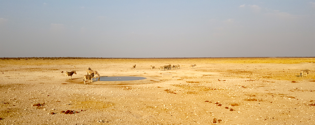 Etosha National Park, Namibia - Animals at the watering hole