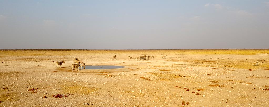 Etosha National Park, Namibia - Animals at the watering hole