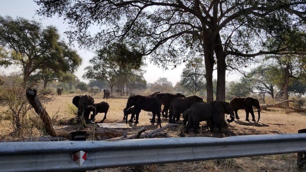 Livingstone, Zambia - Elephants