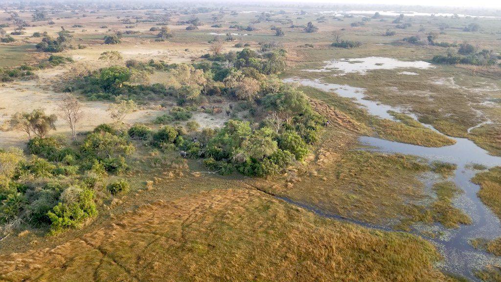 Okavango Delta, Botswana - elephants