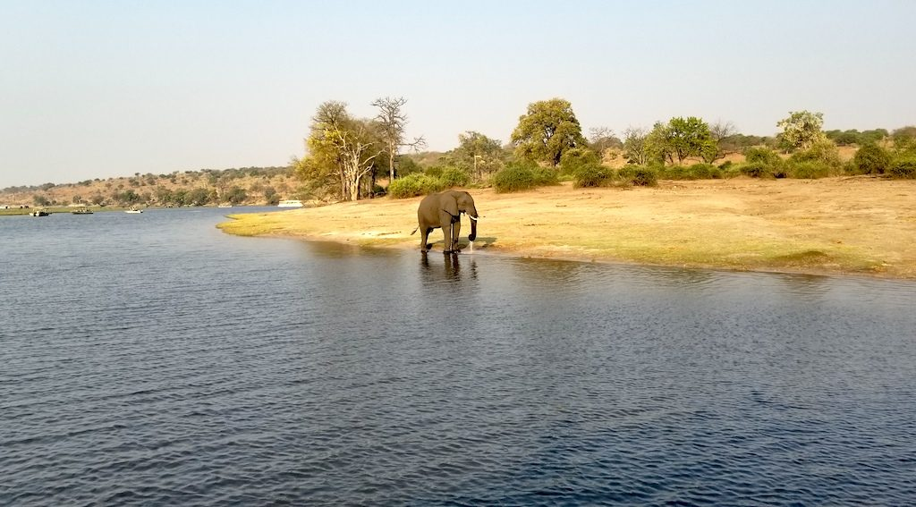 Chobe National Park, Botswana - Elephant Drinking Water