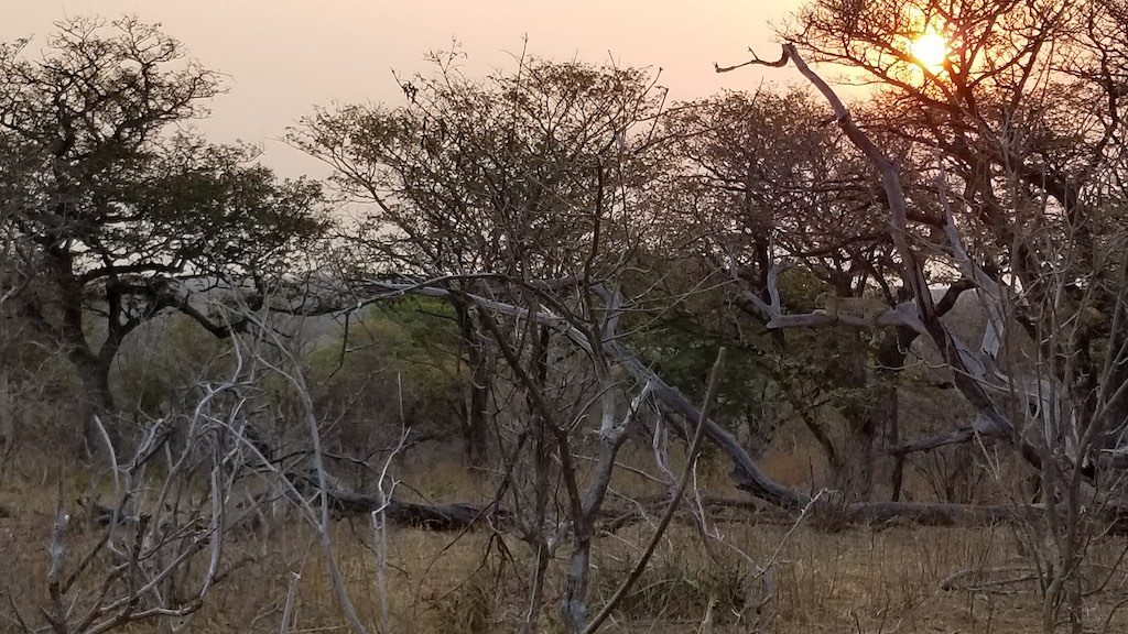 Chobe National Park, Botswana - Leopard at sunrise