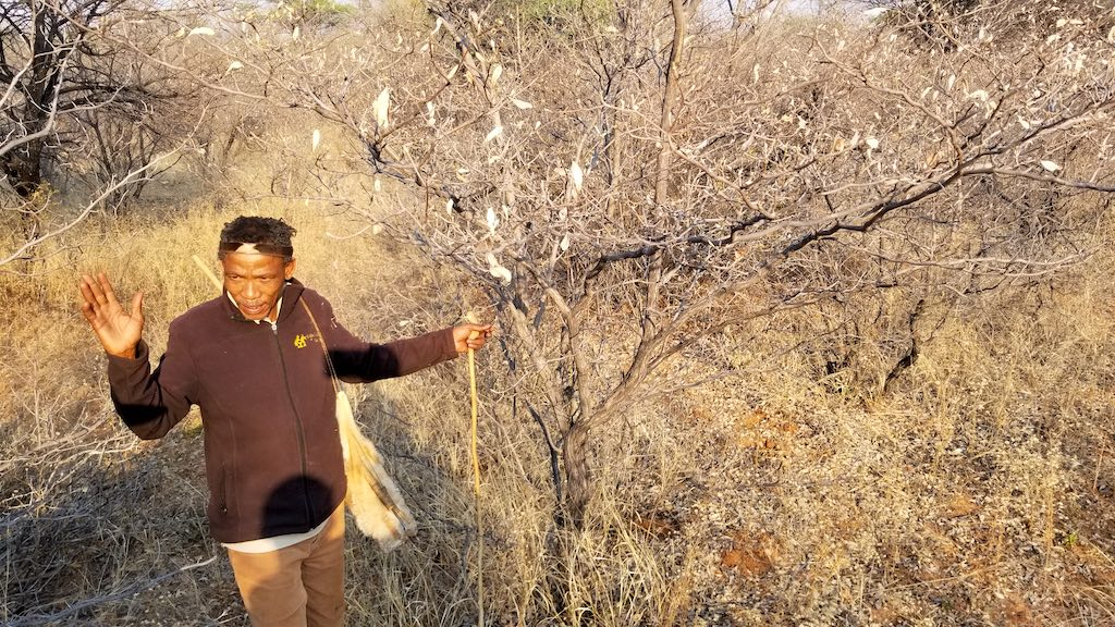 Ghanzi, Botswana - Dqae Qare San Lodge Getting a lesson from the Bushman