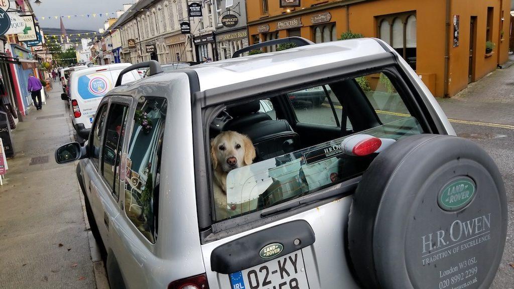 Kenmare, Ireland - Kenmare Dog