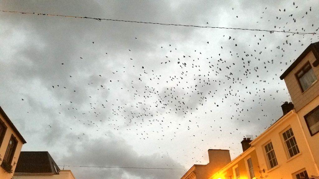 Killarney, Ireland - Birds saying hello